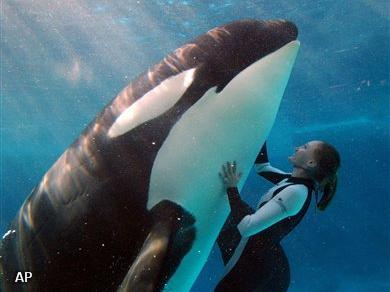 Nieuws orka doodt trainer tijdens show - Foto van de show ...