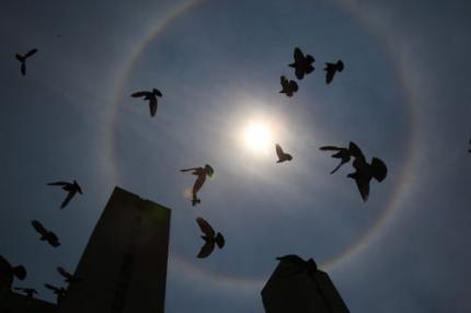 Honderden duiven dood in Italië