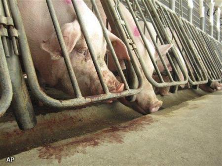 Bleker wil varkensboeren te hulp schieten (Novum)