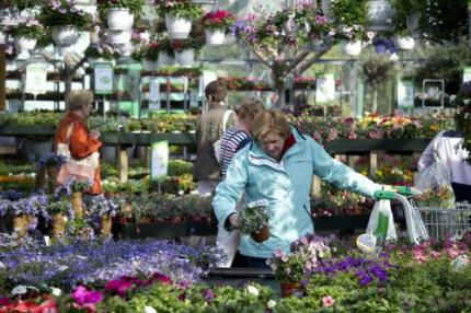 Koude winter en crisis laten tuin bloeien