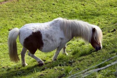 Pony wil met tram aan circus ontsnappen