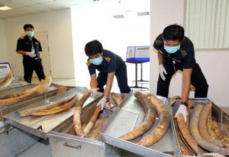 Douane Vietnam onderschept ton ivoor