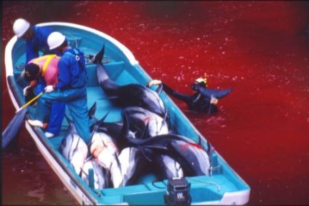 Nederlands lid Sea Shepherd in Japan opgepakt