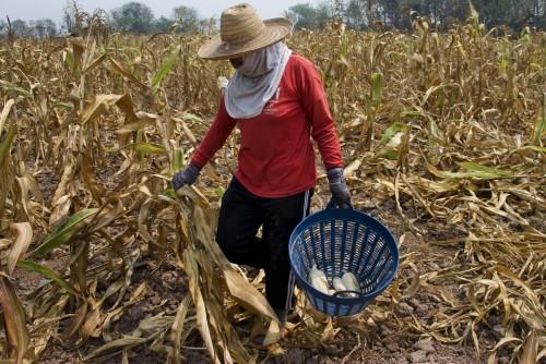 VN: minder honger in de wereld