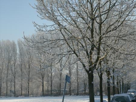 Winterplaatje Haarlem