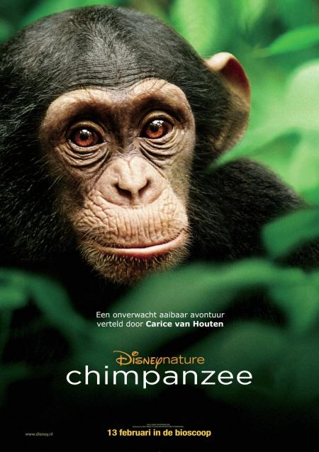 Chimpanzee (13-02-2013)