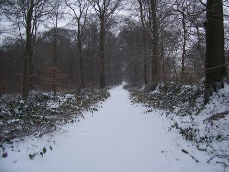 Sneeuw in de bossen