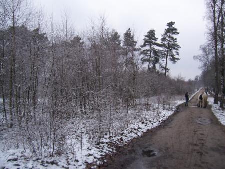 Winter in maart2