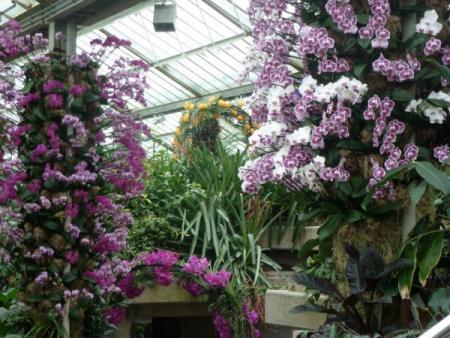 Kew Gardens - Princess of Wales Conservatory