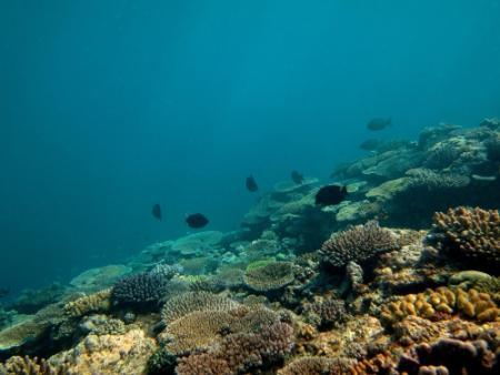 Amerikanen bombarderen per ongeluk koraalrif