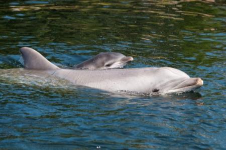 Dolfijn herkent geluid van bekende na 20 jaar