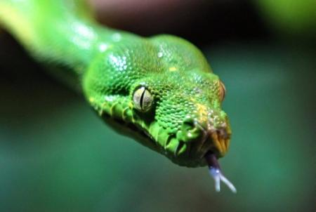 Canadese motelkamer krioelt van de pythons