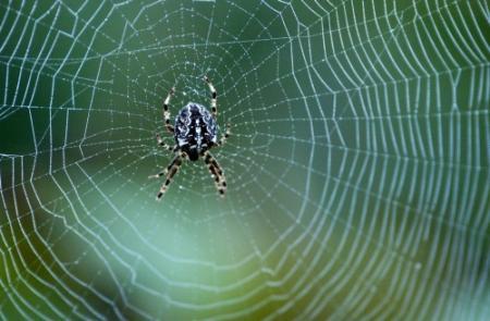 Britse school dicht door invasie van spinnen
