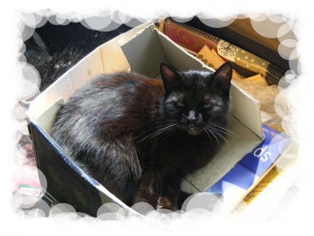 De zwarte kat