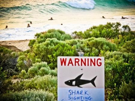 Duizenden tegen haaienjacht Australië