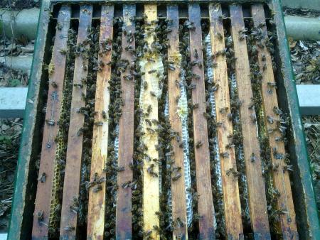 Bijenkast vol bijen; foto Jan Bos