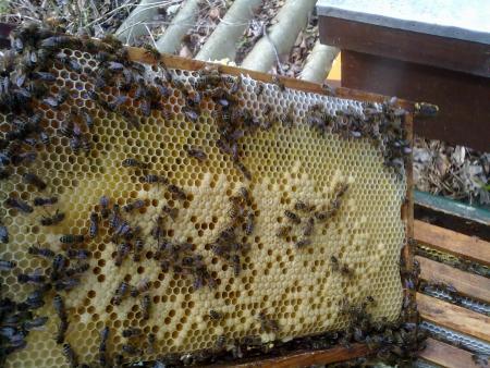 Schuif met bijen