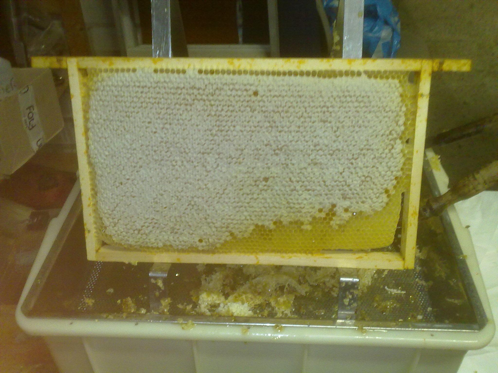 maken wespen honing