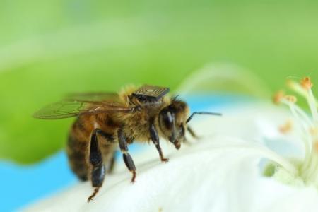 Poolse moet cel in voor dood 2 miljoen bijen