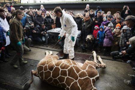 Tweede giraffedrama dreigt in Denemarken