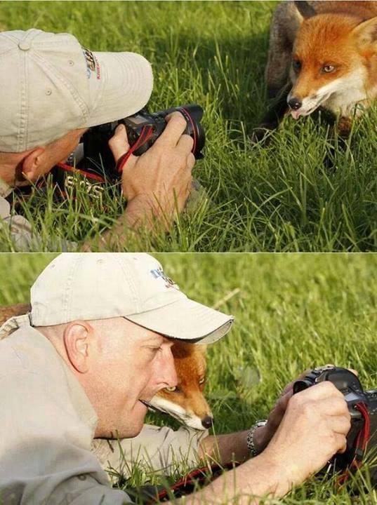 vos met fotograaf