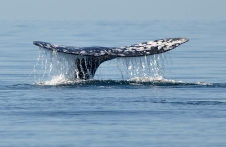 Noren doden recordaantal walvissen