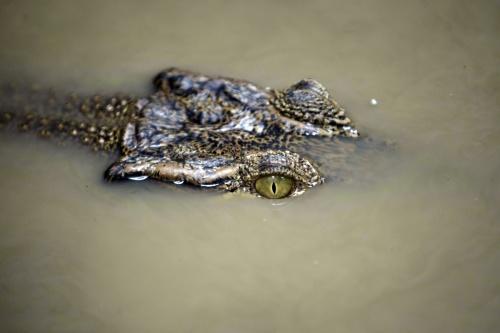 Krokodil blijft Kreta bezighouden