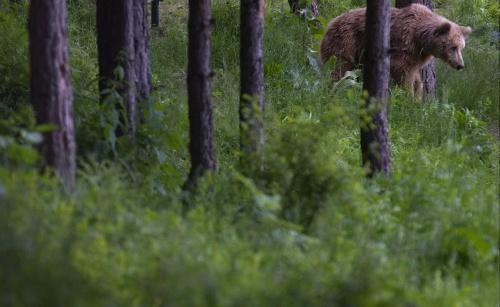 Man maakte foto's van beer die hem doodde