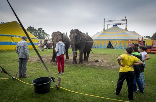 'Circus zonder wilde dieren net zo boeiend'