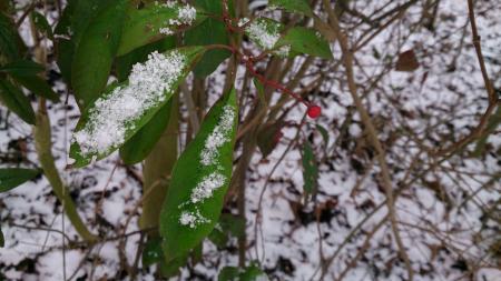 SneeuwD