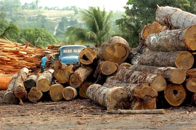 Kap van regenwoud milieu