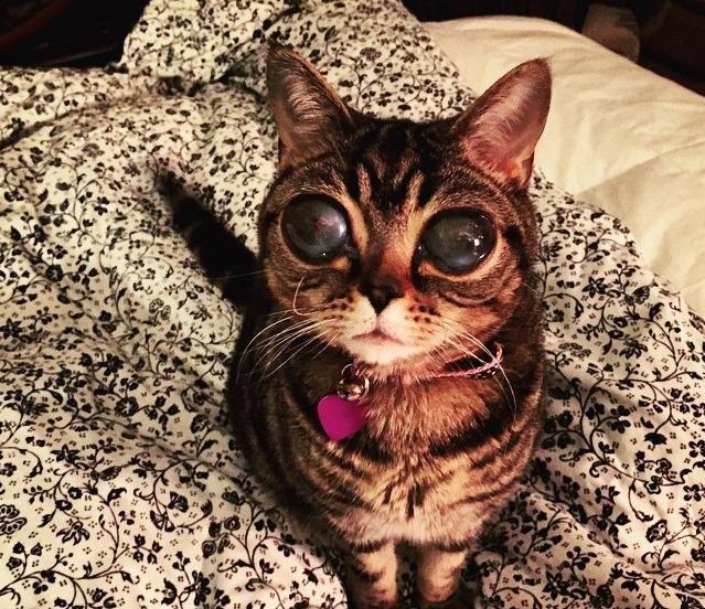 matilda de alien kat