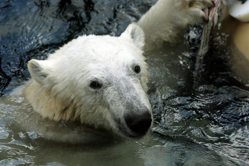 'Drie ijsberen waar wij aan land wilden'