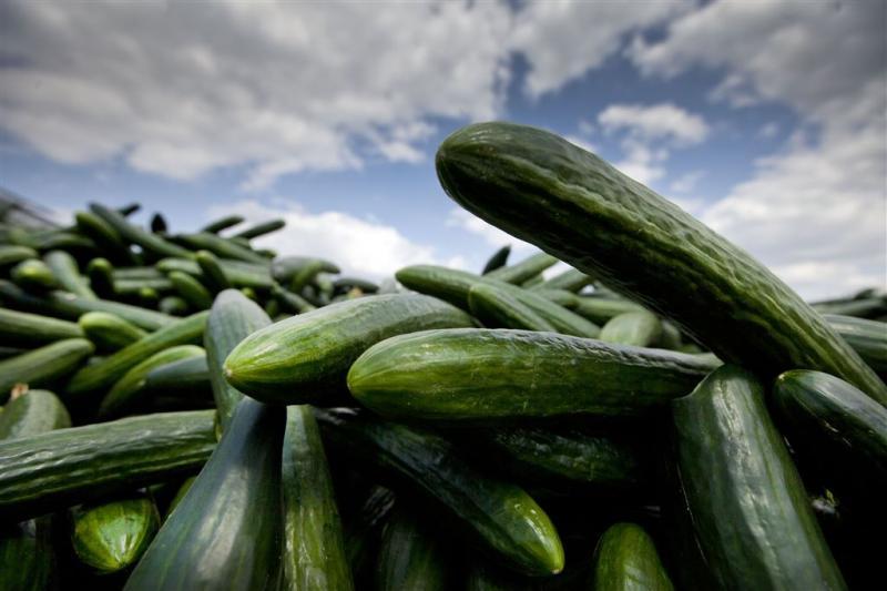 Doden en zieken door salmonella-komkommers