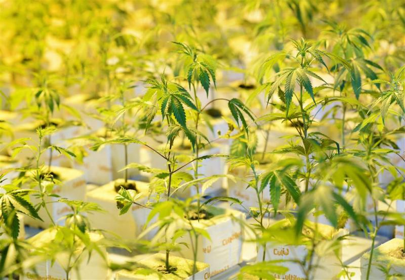 Nederlanders vast voor wietplantage België