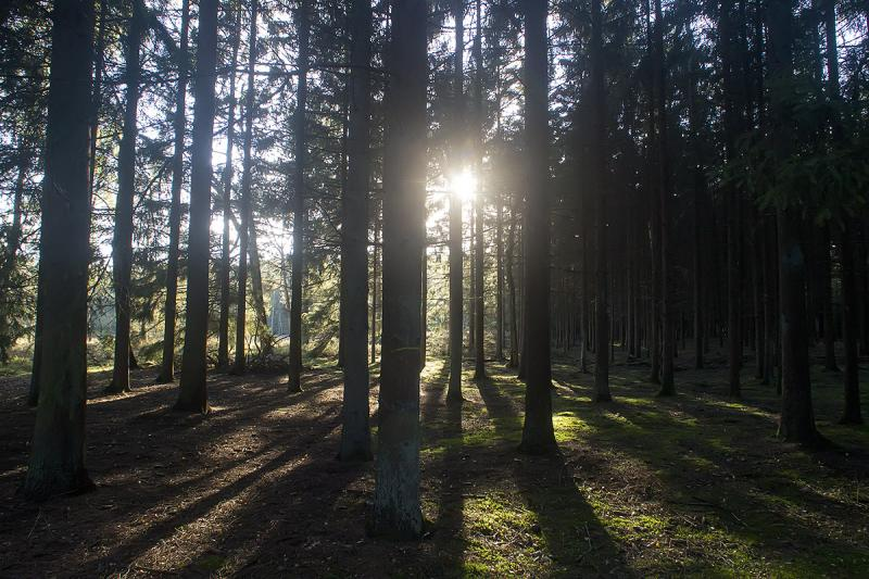 Herfst in het bos (Foto: Ouwesok)