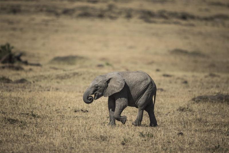 Duitse jager doodt een van grootste olifanten