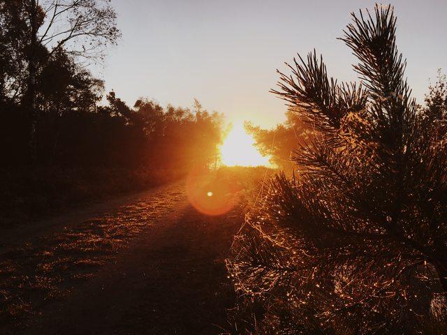 Zonsopgang op de Elspeetse Heide (Nunspeet) (Foto: Mkr)