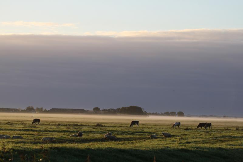 ochtendnevel  (Foto: Klapmongeaul)