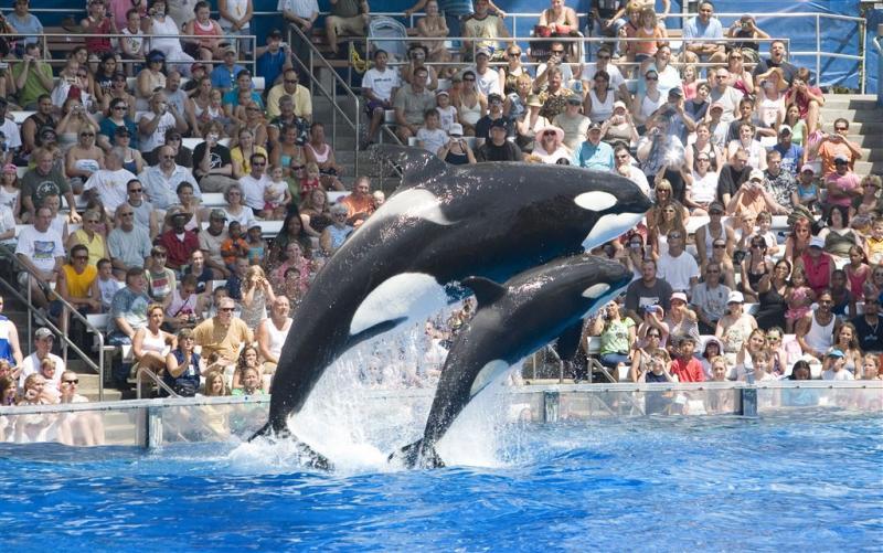 SeaWorld schrapt omstreden orka-show
