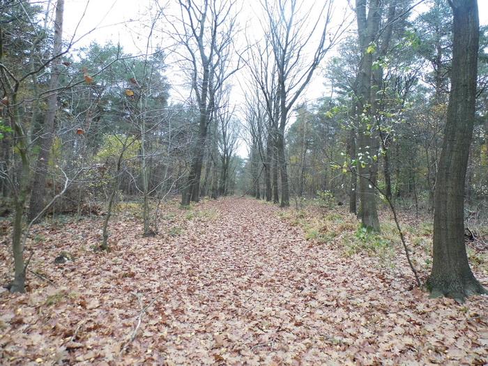 Herfst in het Reichswald  (Foto: qltel)