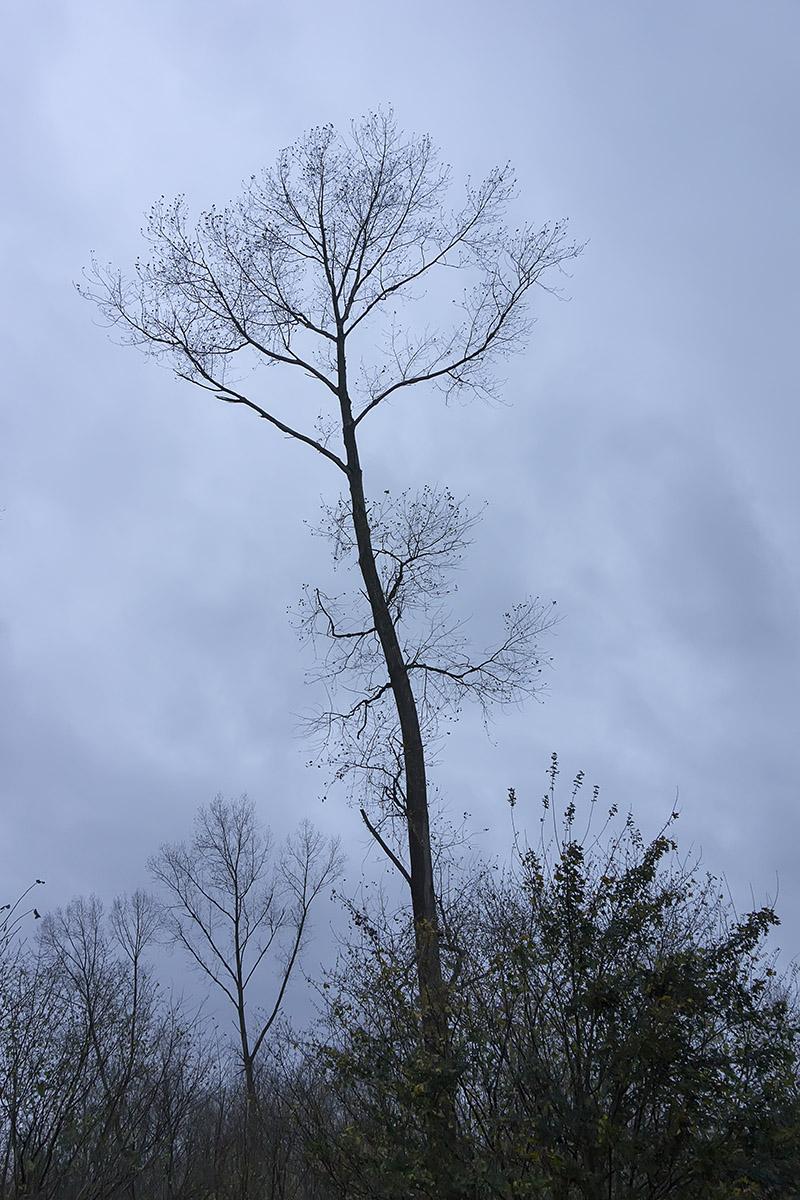 Hoge bomen vangen veel wind (Foto: Ouwesok)