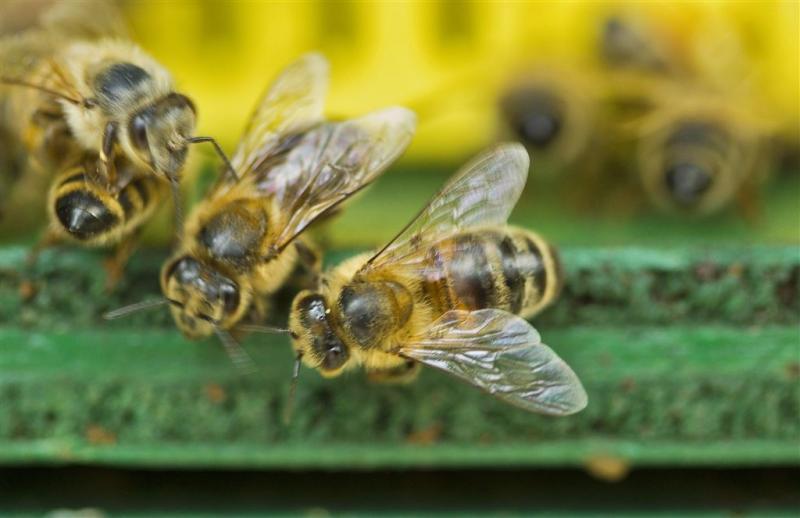 Bijen maken het hulpverleners moeilijk