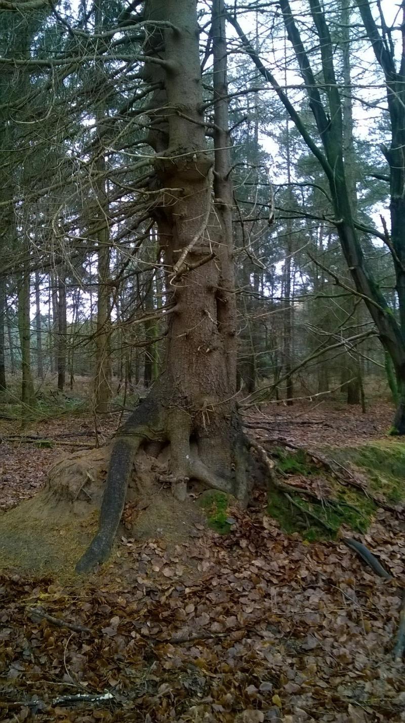 Grumpy Tree - Een boom met een verhaal (Foto: Rewimo)