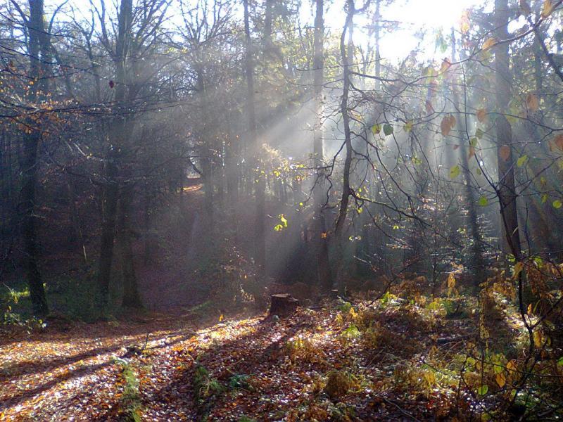 De herfst is begonnen!  (Foto: FOK!)