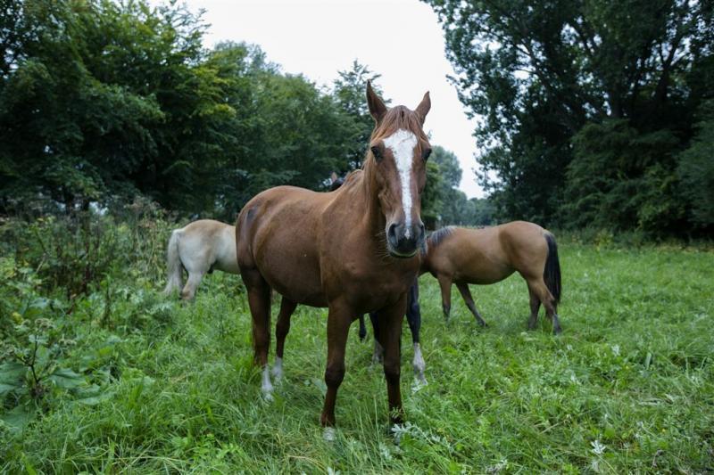 Meer mishandelingen van paarden gemeld
