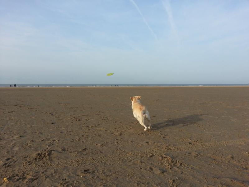 Boris op het strand  (Foto: Herm)
