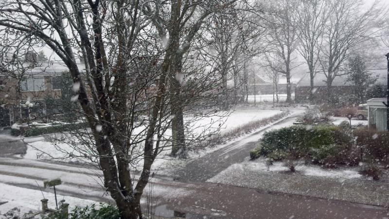 Sneeuw!  (Foto: bondage)