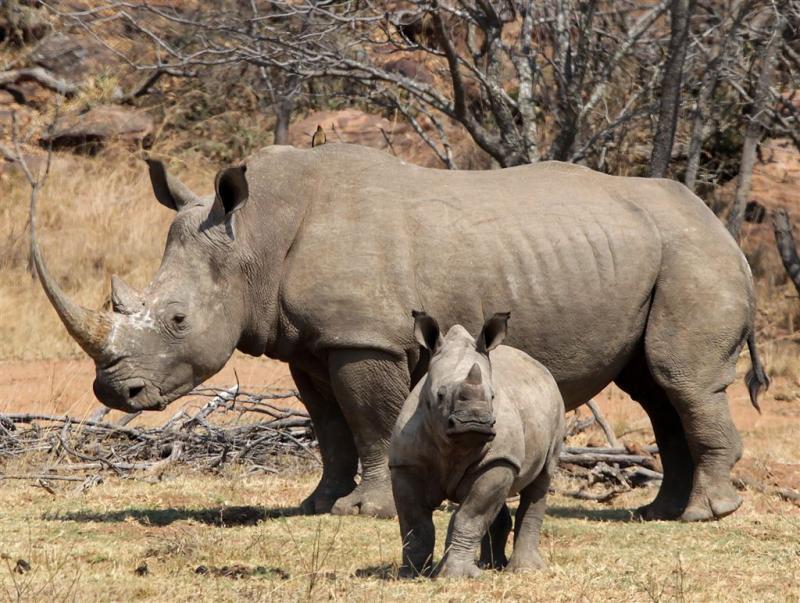 Zuid-Afrika boekt succes tegen stropers