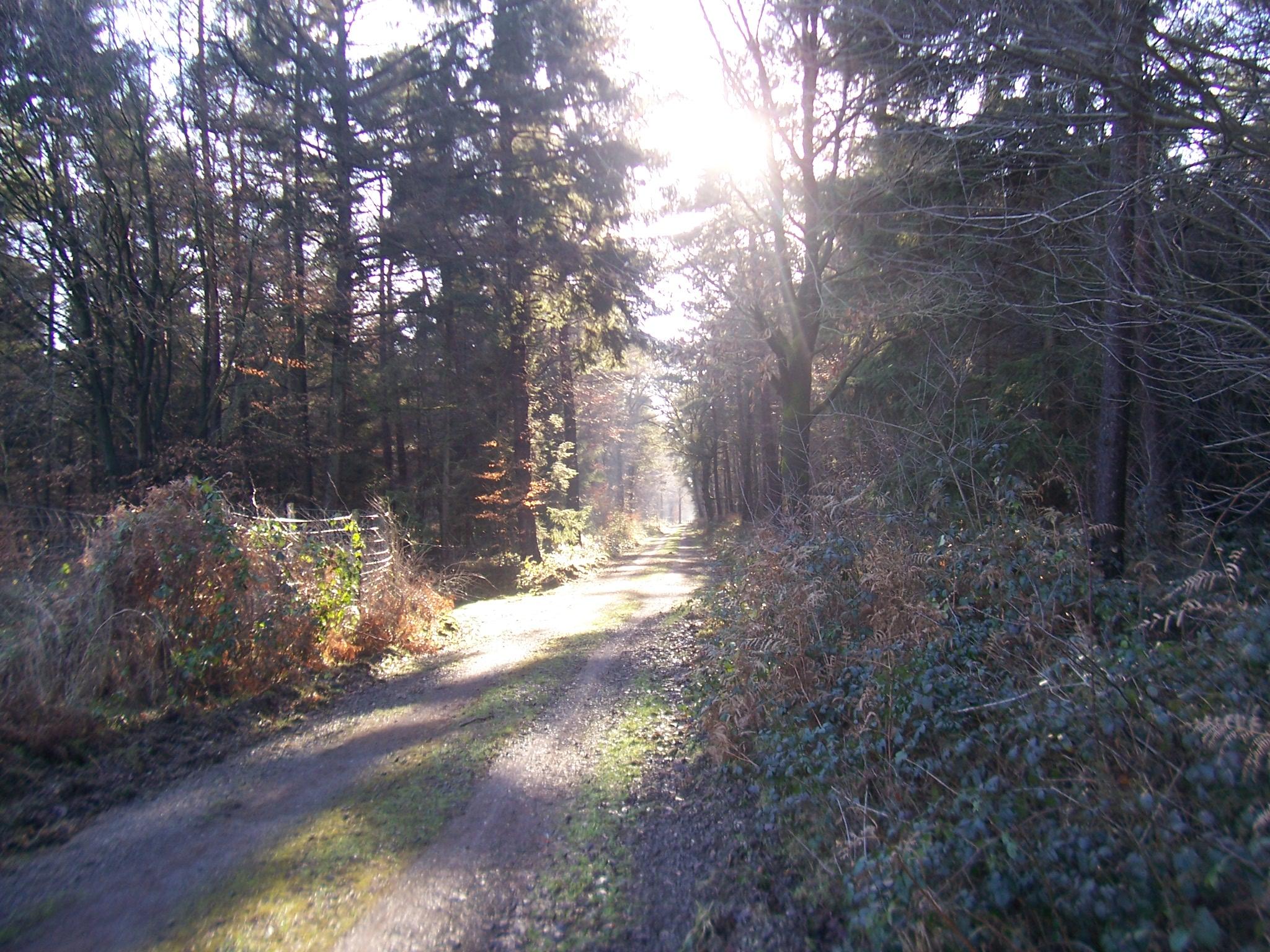 Reichswald op een mooie winterdag